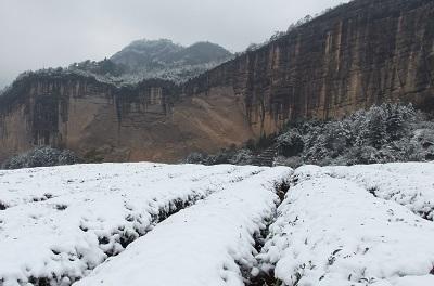 武夷茶園雪景色