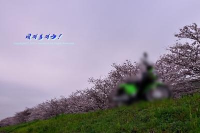 クロスカブ慣らし花見ツー 030