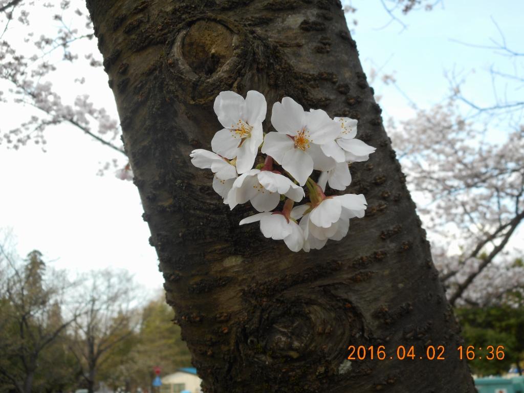 健森幹に咲く花