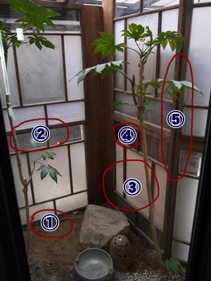 中庭囲い11