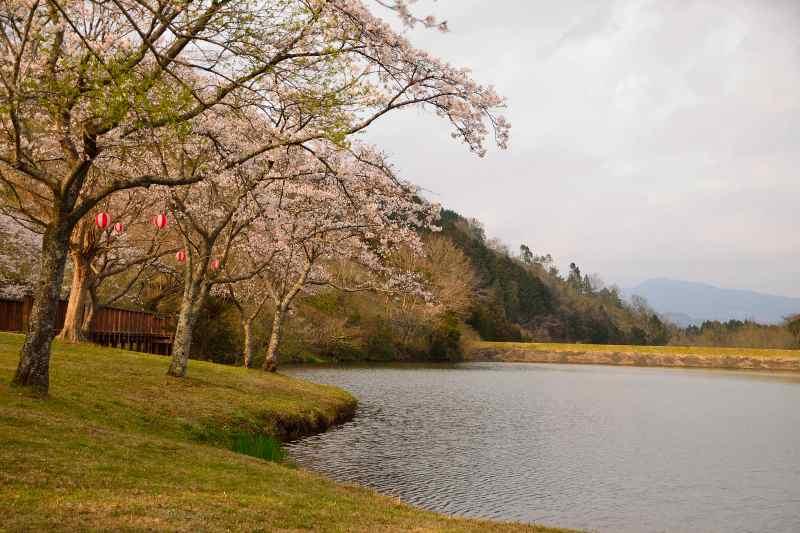 160330萩尾公園 (5)
