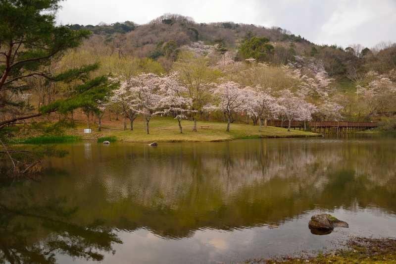 160330萩尾公園 (3)