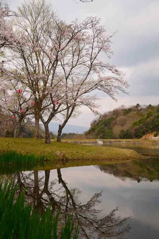 160330萩尾公園 (4)
