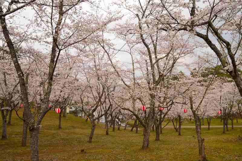 160330萩尾公園 (1)