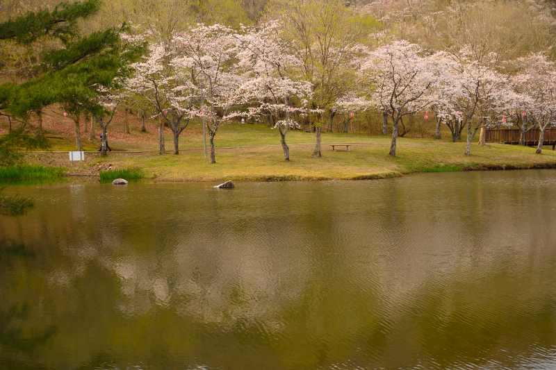 160330萩尾公園 (2)