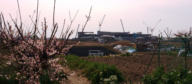 梅の花と長久手イオン建設中現場