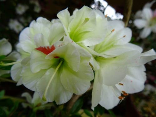 緑花の泉(Ryokukanoizumi)DSC02017