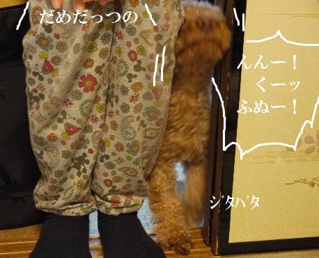 P1440136(1).jpg