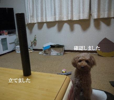 P1440489(1).jpg