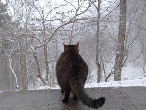 雪だよ!1