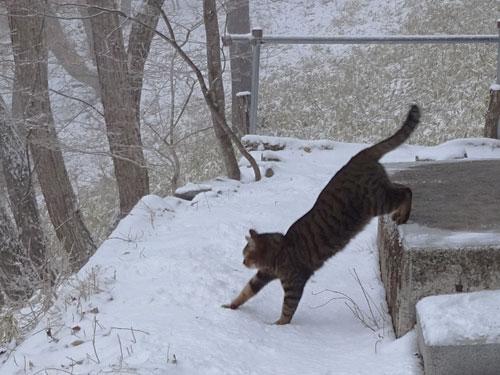雪だよ!3