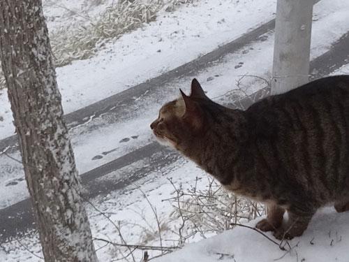 雪だよ!4