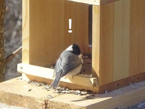 小鳥のおねだり2