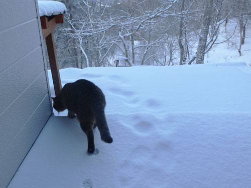 久しぶりの雪景色!1