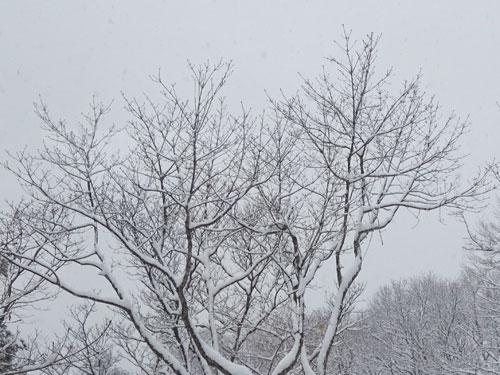 春の大雪2