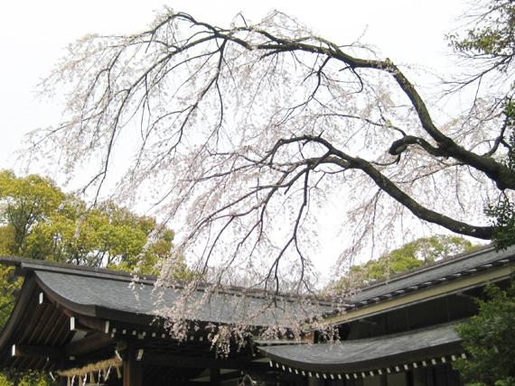 桜2016-03