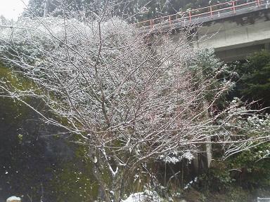 0225梅と雪
