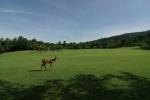 奈良公園新緑