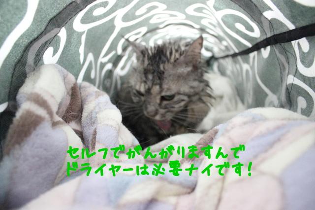 Y4_mdp4E04qyuoO1458635597_1458635679.jpg