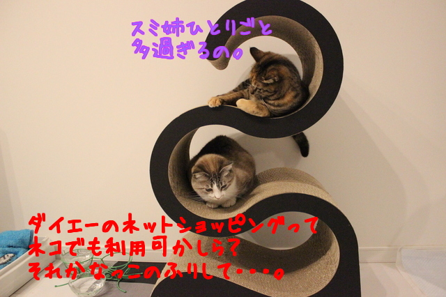 l3fu6ASXUNi960s1459629679_1459629885.jpg