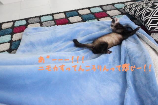 qQuk88dn9dAm5BR1457833567_1457833643.jpg