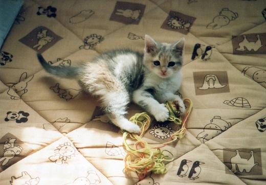 毛糸で遊ぶみーこ2