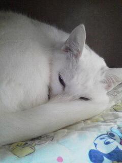 白猫オマケ