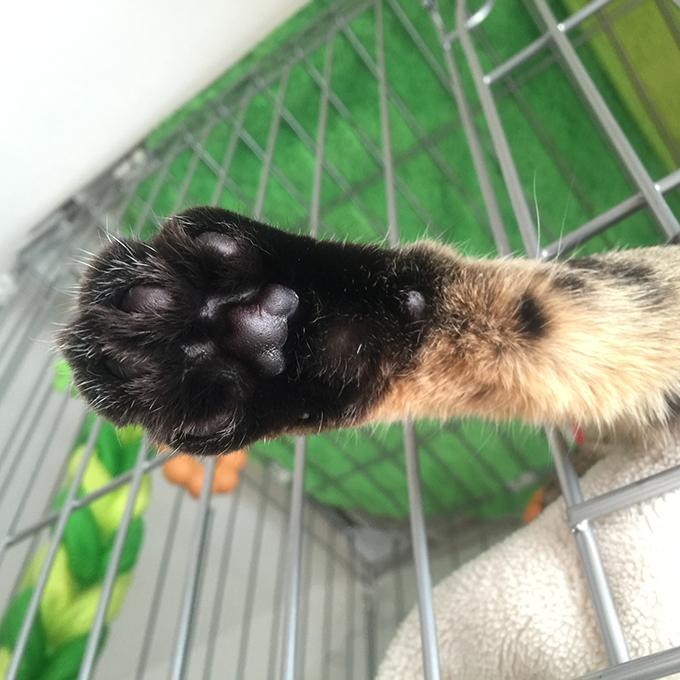2015年10月05日撮影のキジトラ猫クーちゃん