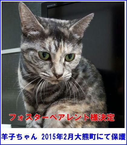 youko_fok.jpg