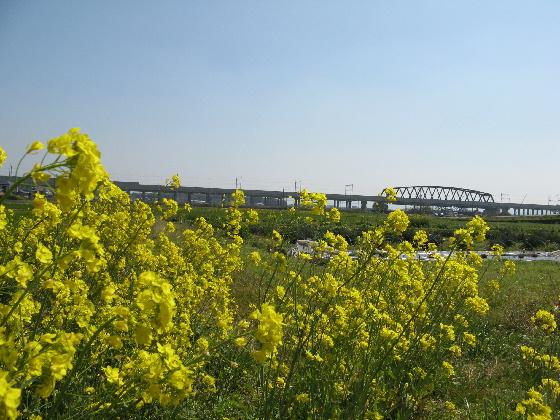 nanohana-shinkansen.jpg