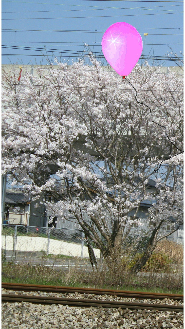 pea-sakura001.jpg