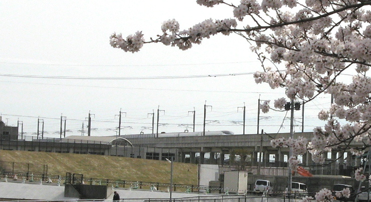 sakura-shin1.jpg
