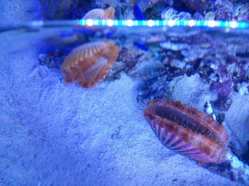 20151226水族館3
