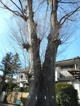 神明社入口前の大木