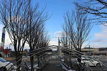 20160303_桜の木剪定3