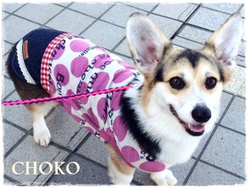 choko115.jpg