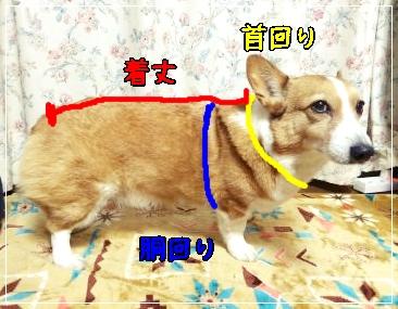 saizujiro.jpg