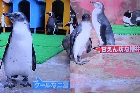 16221ペンギンjpg