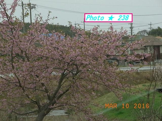 ・ピンクの花