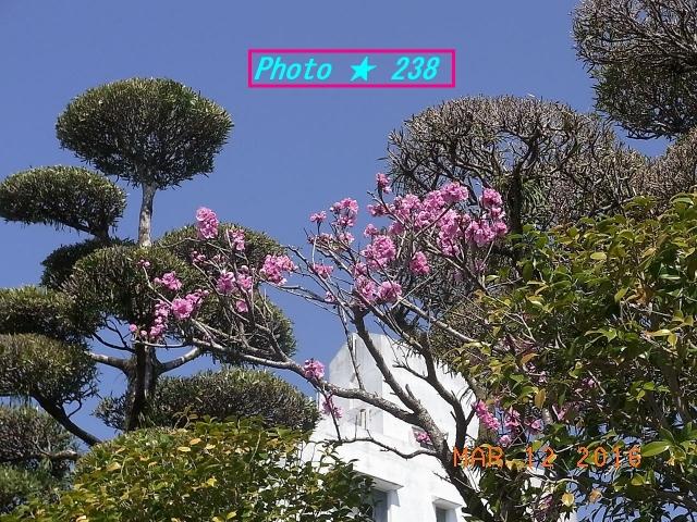 ピンクの花②