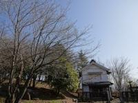 蔵座敷とロケセットの間の桜 3月20日