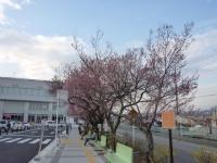 2014年3月29日 韮崎駅前の桜