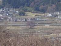 3月26日 わに塚の桜