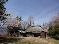 4月1日 ロケセットの桜