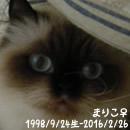mariko2.jpg