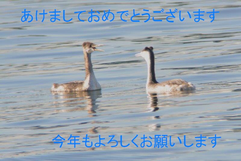 DSC_1404.jpg