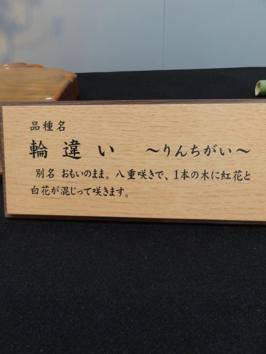 2016研修旅行 066-999
