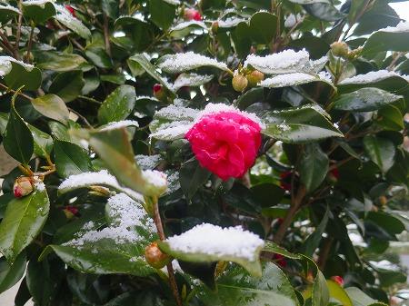 16025雪景色1