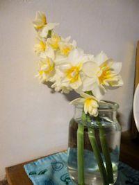 八重咲きのニホンスイセン?