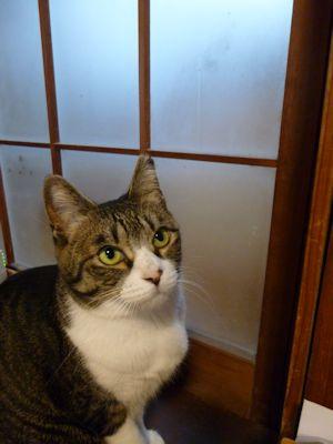 戸をあけて欲しい猫